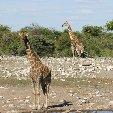Etosha National Park Namibia Okaukuejo Picture