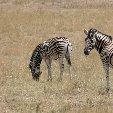 Etosha National Park Namibia Okaukuejo Blog