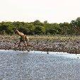 Etosha National Park Namibia Okaukuejo Trip Adventure