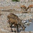 Etosha National Park Namibia Okaukuejo Information
