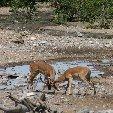 Etosha National Park Namibia Okaukuejo Travel Experience