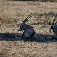 Etosha National Park Namibia Okaukuejo Trip Sharing