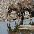 Etosha National Park Namibia Okaukuejo Adventure