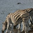 Etosha National Park Namibia Okaukuejo Picture gallery