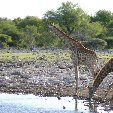 Etosha National Park Namibia Okaukuejo Story Sharing