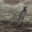 Ojitotongwe Cheetah Park Namibia Kamanjab Album Photographs