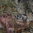 Ojitotongwe Cheetah Park Namibia Kamanjab Review Gallery Ojitotongwe Cheetah Park Namibia