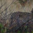 Ojitotongwe Cheetah Park Namibia Kamanjab Vacation Pictures Ojitotongwe Cheetah Park Namibia