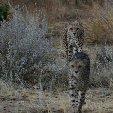 Ojitotongwe Cheetah Park Namibia Kamanjab Holiday Sharing Ojitotongwe Cheetah Park Namibia