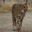Ojitotongwe Cheetah Park Namibia Kamanjab Album Sharing Ojitotongwe Cheetah Park Namibia