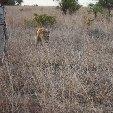 Gweru Antelope Park Zimbabwe Diary Tips