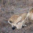 Gweru Antelope Park Zimbabwe Travel Guide