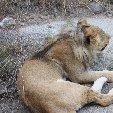 Gweru Antelope Park Zimbabwe Diary
