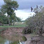 Los Llanos Venezuela Tours Barinas Diary Information