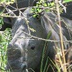 Ziwa Rhino Sanctuary Uganda Nakasongola Trip Guide