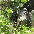 Ziwa Rhino Sanctuary Uganda Nakasongola Holiday Experience