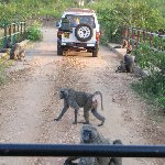 Uganda tours and safaris Masindi Information