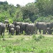 Uganda tours and safaris Masindi Review Picture