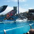 Sea World tickets San Diego United States Diary Experience