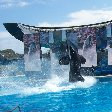 Sea World tickets San Diego United States Holiday Pictures