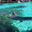 Sea World tickets San Diego United States Vacation Photos