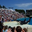 Sea World tickets San Diego United States Diary Sharing