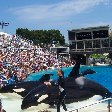 Sea World tickets San Diego United States Vacation Pictures