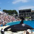 Sea World tickets San Diego United States Vacation Picture