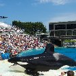 Sea World tickets San Diego United States Travel Picture
