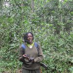 Chimp trekking Uganda Fort Portal Travel Blog