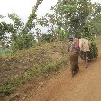 Chimp trekking Uganda Fort Portal Album Chimp trekking Uganda