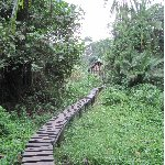 Chimp trekking Uganda Fort Portal Blog Information Chimp trekking Uganda