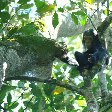 Chimp trekking Uganda Fort Portal Review Gallery