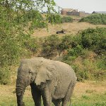 Uganda wildlife safari Kasese Diary Picture