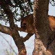 Uganda wildlife safari Kasese Experience