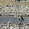 Namibia Kalahari Desert lodge safari Otjiwarongo Story Sharing