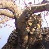 Namibia Kalahari Desert lodge safari Otjiwarongo Blog Experience