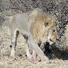 Namibia Kalahari Desert lodge safari Otjiwarongo Vacation