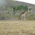 Safari Botlierskop Private Game Reserve Moordkuil South Africa Album Pictures