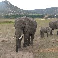 Safari Botlierskop Private Game Reserve Moordkuil South Africa Diary Adventure