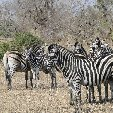 Mpumalanga South Africa Diary Information