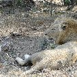 Kruger National Park camping safari Mpumalanga South Africa Holiday Adventure