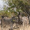 Etosha National Park Namibia Travel Information