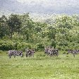 Tanzania safari holiday in Arusha Travel Blog