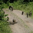 Tanzania safari holiday in Arusha Vacation Diary