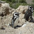 Puerto Madryn Patagonia Wildlife Tours Argentina Trip Experience