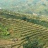 Trekking in Sapa Vietnam Sa Pa Diary Sharing Trekking in Sapa Vietnam