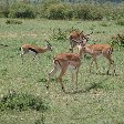 Great Masai Mara Camp Stay Kenya Diary Pictures
