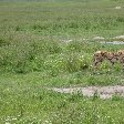 Tanzania Wildlife Safari Tarangire National Park Travel Gallery