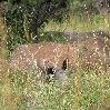 Uganda Safari Murchison Falls NP Lolim Diary Pictures